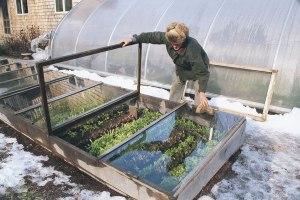 Með skynsamlegri ræktun, gróðurhúsum og kössum er hægt að rækta yfir vetrartímann. ref: http://www.vegetablegardener.com/item/2504/cold-frame-gardening/page/all